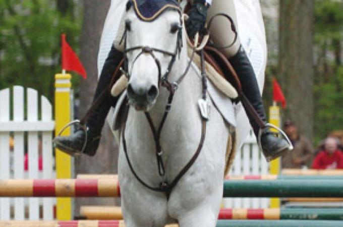 HORSESHOW 2 DAILY BJS SAR PXP